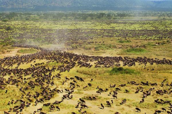 Image result for wildlife in Tanzania