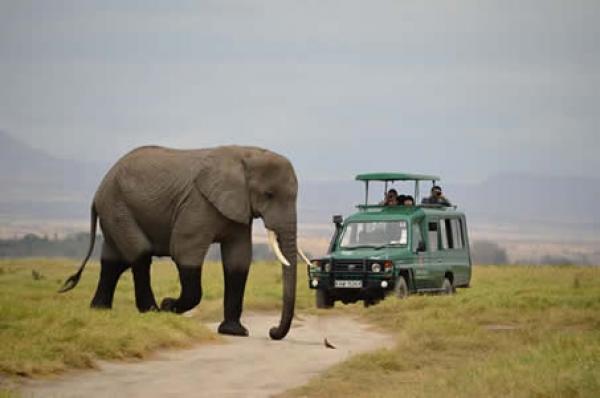 6 Days Kenya Wildlife Safari Tours