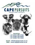 Cape Pursuits cc