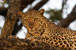 Travel deals alert, Tanzania wildlife safari exciting discount offers