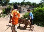 Tiger Temple and Riding Elephant in Kanchanaburi,Thailand
