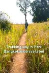Khao Yai National Park Trekking in Thailand