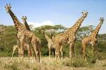 3 Days-2Nights Samburu Wildlife safaris