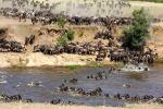 MAASAI MARA-WITNESS THE 7th  WONDER OF THE WORLD