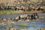 14-Day Great Migration and Zanzibar (December to March)