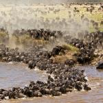 11 Days Tented lodge wildebeest migration