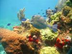 PADI diving and snorkelling tours