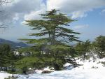 Wildest Trails of Lebanon
