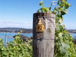 The Gourmet's Food and Wine Tour of Waiheke Island, New Zealand